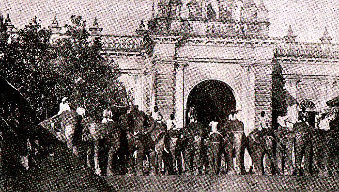 elephant-muktagacha